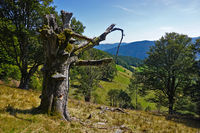 Hiking near the mountain Schauinsland in the Black Forest, Germany