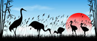 Japanese cranes in the wild