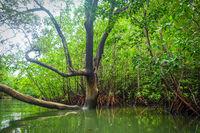 Mangrove in Phang Nga Bay, Thailand