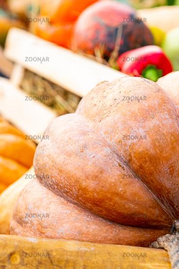 big orange pumpkin ribbed part big vegetable part on blurred vegetables background