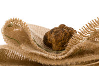 Original italian white truffle (tuber magnatum) on white background.