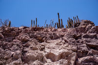 the desert in the Elqui Valley