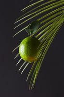 Fresh lime on palm leaf around black background with copy space. Food layout.