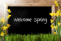 Sunny Narcissus, Chalkboard, English Text Welcome Spring