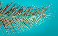 Retro Palm Tree Against Azure Sky