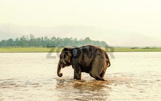 Elephant bathing in Chitwan national park, Nepal