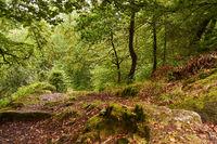 Grüne Wald Landschaft in Huelgoat, Frankreich