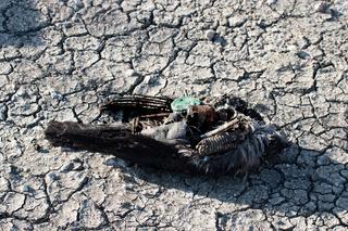 global environmental disaster.