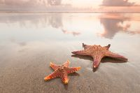 Two starfish on sea beach at sunset