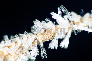 Hoarfrost on the branches. Ice crystals macro