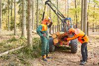 Zwei Waldarbeiter kontrollieren Schädlingsbefall