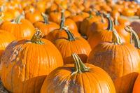 Orange pumpkins at outdoor farmer market