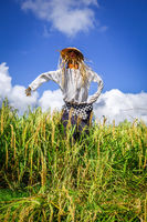 Scarecrow in Jatiluwih paddy field rice terraces, Bali, Indonesia