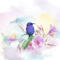 Red Legged Honeycreeper bird on Pink Dipladenia flowers . Watercolor painting.