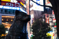 TOKYO, JAPAN - 12 FEB 2018: Tight shot of the statue of Hachiko dog in Shibuya Crossing with bright colorful billboards behind