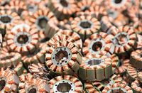 numerous rotors of an electric motor - copper wire windings