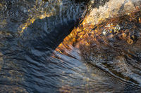Creek details, Muddus National park, world heritage Laponia, Lapland, Sweden