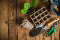 Seedlings and garden tools on a wooden surface