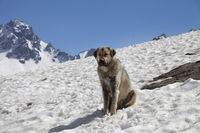 Dog bask in sun on snow at sunny day, snowy mountains and blue sky at background