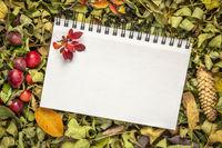 blank spiral art sketchbook i