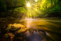 Sunshine at a river in the forest