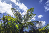 typical fern at New Zealand