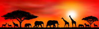Savanna animals on a background of a sunset sun.eps