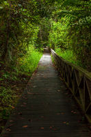 Boardwalk in dense rainforest Borneo Malaysia