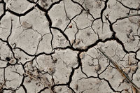 Cracked Dry Land Texture