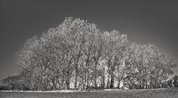 Landscape near Ahrenshoop