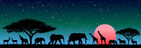 Wild animals in the night African savannah
