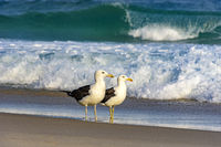 Two seagulls on the beach