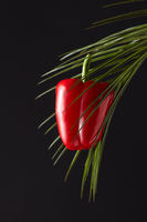 Ripe red pepper presented on a green palm branch around a black background with a copy space. The concept of organic food