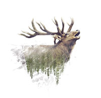 Deer and Forest. Watercolor Double Exposure effect on white background