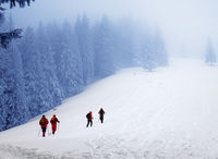 Hikers go up on snowy slope in snow-covered spruce forest at haze