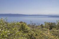 On the peninsula Koromacno in Istria