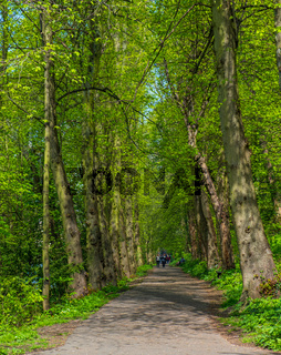 People walk along a walkway surrounded by a lush forest in Durham, United Kingdom on a beautiful spring day.