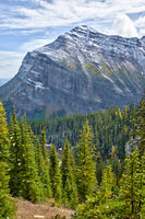 Yellow larches in Autumn above Lake Louise in Banff National Park, Alberta