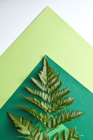 Fern leaf on a multi-colored green cardboard around a gray background with copy space. Natural composition as a background for your ideas. Flat lay