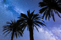Blue Milky way falling stars palm trees