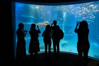 Marine aquarium with visitor silhouettes