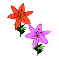 Mohit-Batch-5-Flower_Asiatic Lily_04.eps