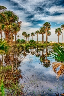 reflections of palm trees on hunting island south carolina