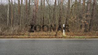 Straßenrand mit Leitpfosten vor dichtem Unterholz, Deutschland