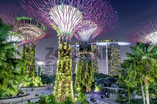 Singapur - Gardens by the Bay mit den Super Trees bei Nacht, im Hintergrund das Marina By Sands Hotel
