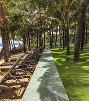 Row of beach deckchairs under coconut palm trees