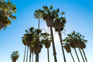 palm trees over sky at venice beach, california