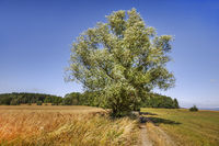 Landscape in Upper Franconia