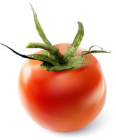 Red tomato on a white background. Vector illustration