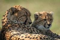 Close-up of cheetah lying asleep by cub